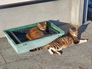 地面に横たわっている猫の写真・画像素材[3288110]