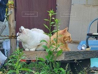 建物の上に座っている猫の写真・画像素材[3288116]