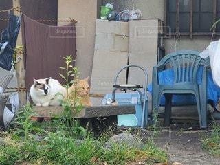 家の前のいすに座っている猫の写真・画像素材[3288120]