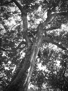 自然の写真・画像素材[184655]