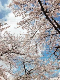 春の写真・画像素材[438381]
