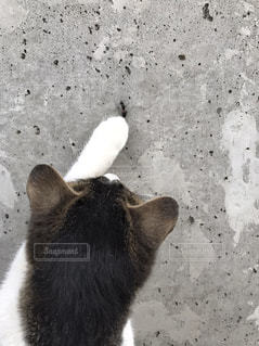 猫の写真・画像素材[593356]