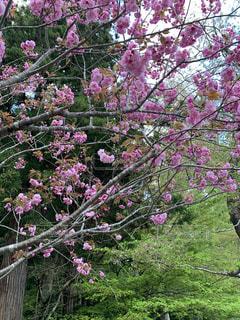 かわいい花!の写真・画像素材[2090726]