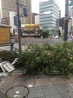 台風被害 倒木の写真・画像素材[3294466]