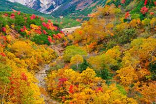 十勝岳温泉の紅葉の写真・画像素材[3778750]