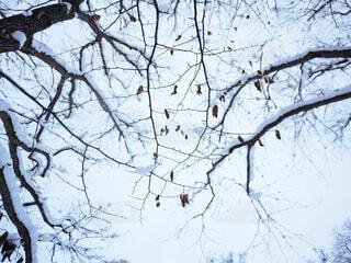 雪の積もった枝の写真・画像素材[3970455]