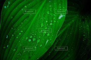 水滴と植物の写真・画像素材[4308004]