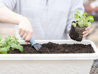 家庭菜園の写真・画像素材[4796660]