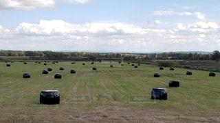 広い牧場に転がる牧草ロールの写真・画像素材[3293893]