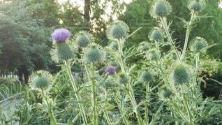 庭の植物の写真・画像素材[3294476]