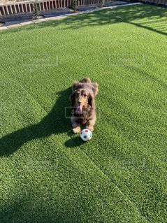 ボールで遊ぶ犬の写真・画像素材[3297687]