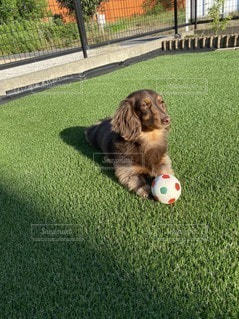 ボールで遊ぶ犬の写真・画像素材[3297689]