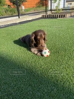 ボールで遊ぶ犬の写真・画像素材[3297690]