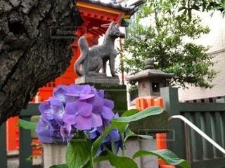 紫陽花と神社の写真・画像素材[3315965]