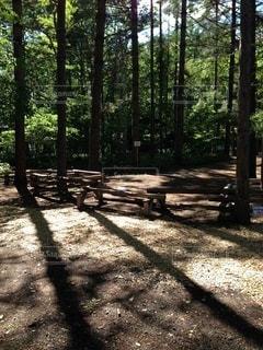 木製の垣根の眺めの写真・画像素材[3306139]
