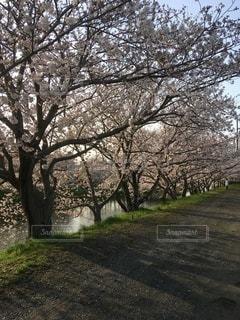木のクローズアップの写真・画像素材[3306213]