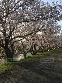 木のクローズアップの写真・画像素材[3326531]