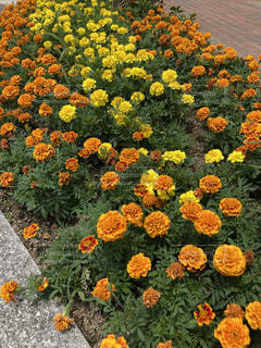 花のクローズアップの写真・画像素材[3333155]
