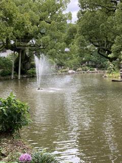 水に囲まれた大きな木の写真・画像素材[3373165]