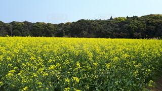 黄色、緑色、青色のコントラストの写真・画像素材[3301433]