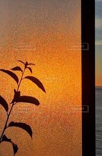 朝日 背景 シルエット 植物の写真・画像素材[3968781]