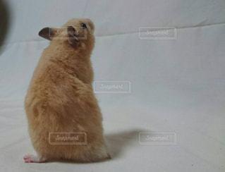 動物の写真・画像素材[140005]