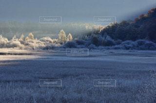 栃木県の日光、小田代ヶ原の晩秋の朝の写真・画像素材[3819360]