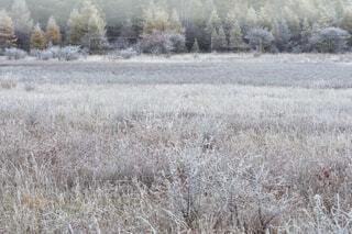 栃木県の日光、晩秋の小田代ヶ原の日の出前の風景の写真・画像素材[3819377]