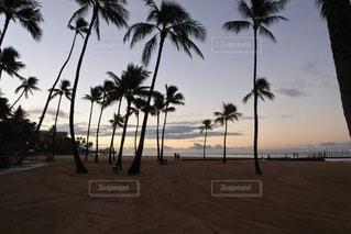 ヤシの木の隣の砂浜の写真・画像素材[3304762]
