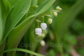緑の植物のクローズアップの写真・画像素材[3305989]