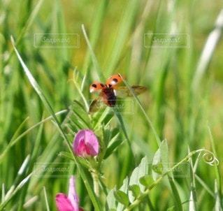 花のクローズアップの写真・画像素材[3309511]