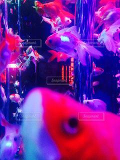 魚の写真・画像素材[139814]