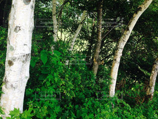 自然の写真・画像素材[139815]