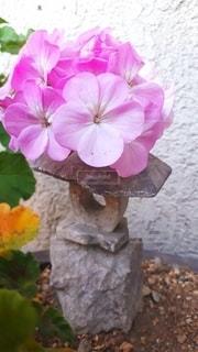 ピンクのお花の写真・画像素材[3311539]