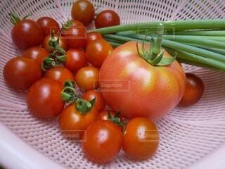 家庭菜園。今日の収穫。の写真・画像素材[4568018]