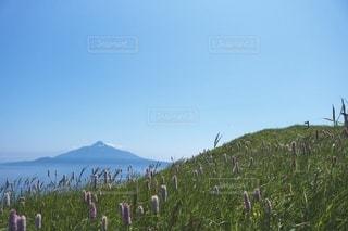 利尻富士と草原の写真・画像素材[3309766]