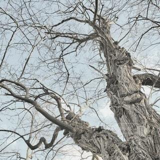 大木のクローズアップの写真・画像素材[3317498]
