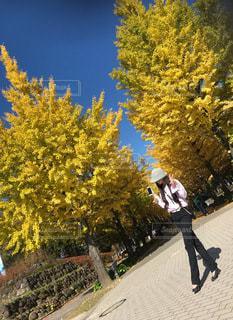 秋晴れの休日。イチョウ並木で季節を味わうの写真・画像素材[3321023]