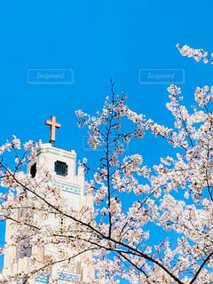 青空とさくらの写真・画像素材[3667386]