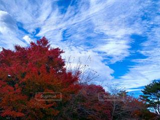秋晴れの空と紅葉の写真・画像素材[3884808]