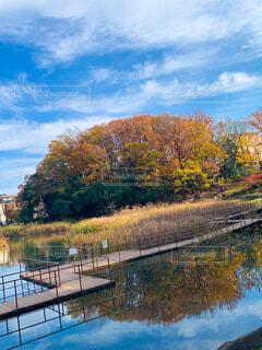 紅葉と池の写真・画像素材[3981181]