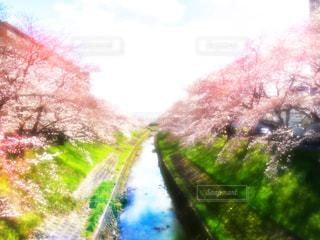 花 - No.139042