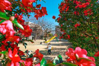 いつもの公園の写真・画像素材[3316148]