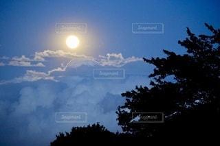 雲と青空の木の写真・画像素材[3313375]