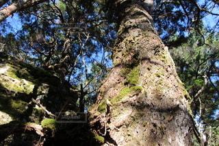 背景に山のある木の写真・画像素材[3313923]
