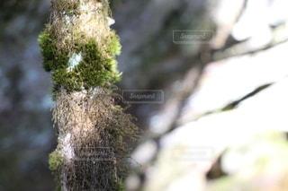 木の枝に止まっている鳥の写真・画像素材[3313927]
