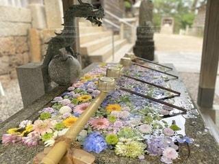 花いっぱいの手水の写真・画像素材[3552063]