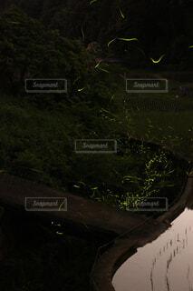 ホタルの住む水辺の写真・画像素材[4541946]