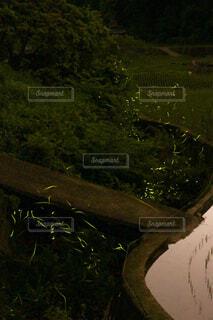 ホタルの飛ぶ水辺の写真・画像素材[4541951]