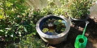 庭のビオトープとじょうろの写真・画像素材[3314491]